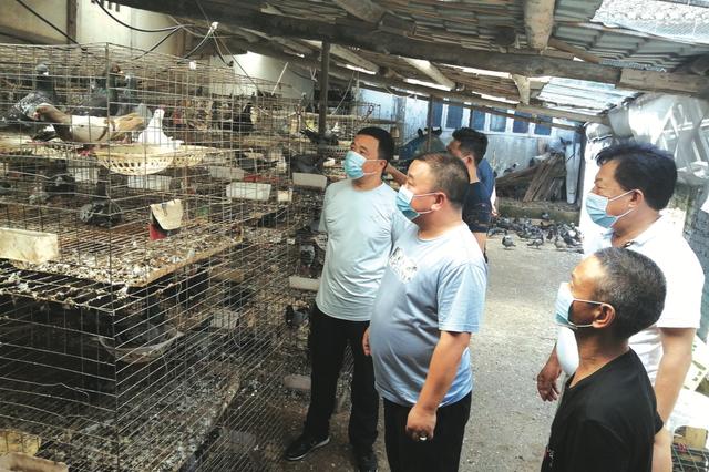 11家餐饮店认购4200只肉鸽 遵义市烹协呼吁:8月11日至15日到