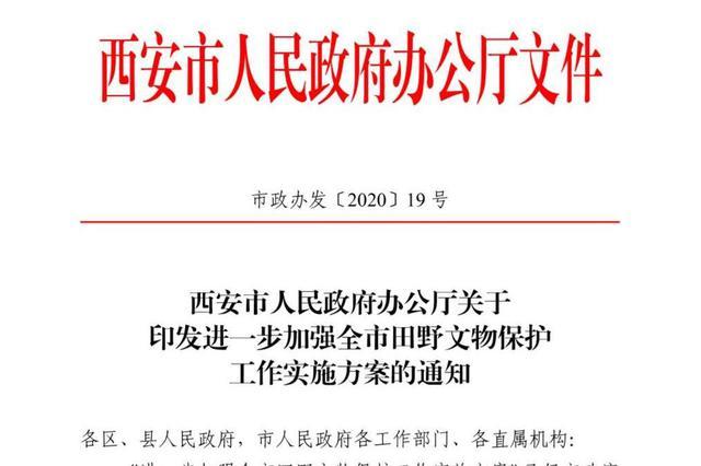 西安:将文物安全纳入政府年度考核