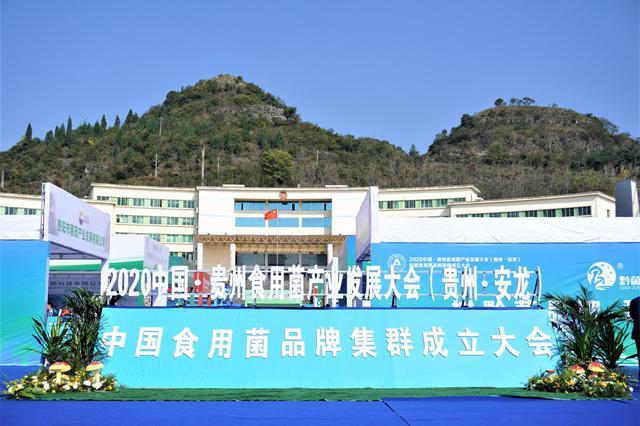 安龙县食用菌产业发展情况
