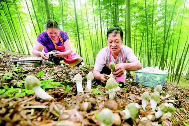 生态与经济并重 治石与治穷共举!贵州特色林业产业闯出发展新路子