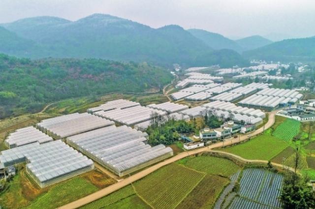 """修文县蔬菜保供基地扫描:搭建""""黄金棚"""" 铺就致富路"""