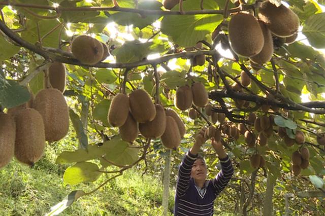 修文县入围第三批国家现代农业产业园认定名单