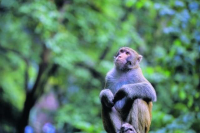 贵阳市野生动植物资源保护管理能力持续提升
