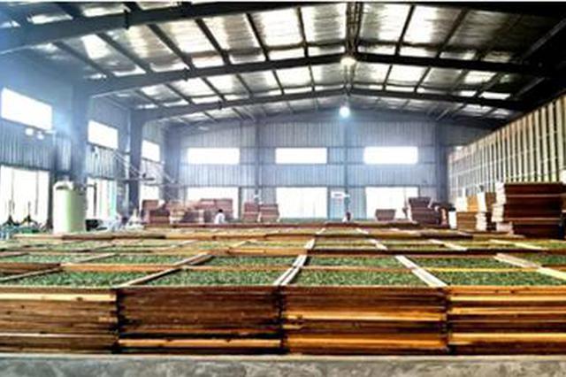 贵州湄潭一季度茶叶出口421万美元