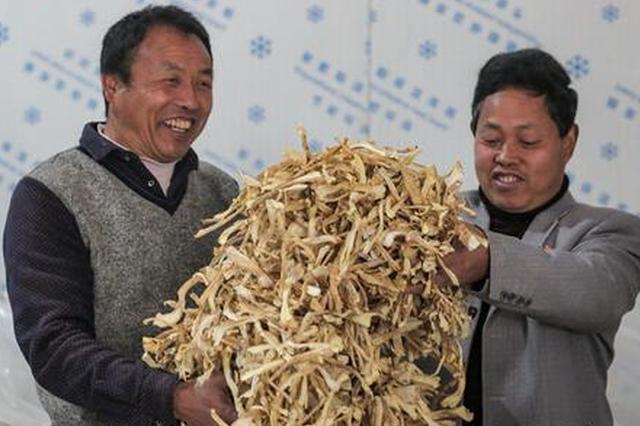 贵州务川:赤松茸产业助农增收致富