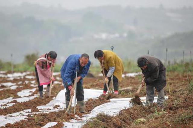 贵州纳雍:坝区春种忙