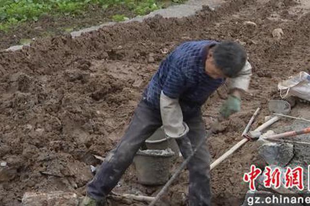贵州金沙:坝区变稻田 打造精品粮油生产基地