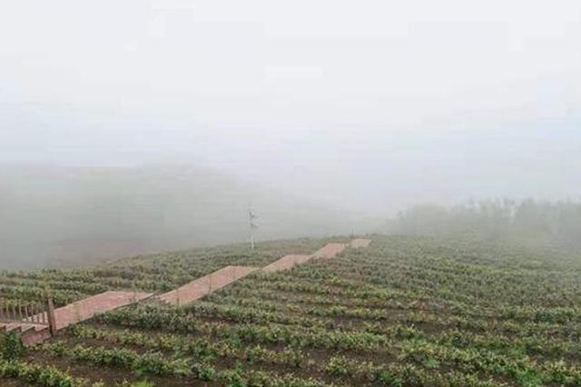 数字化服务+电商平台 助力普安携茶发展