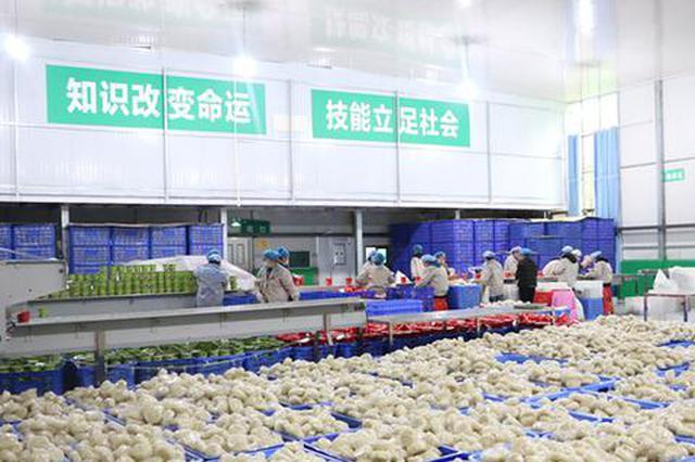 贵州思南做强红薯产业助力乡村振兴