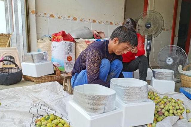 贵州毕节七星关区:李子成熟迎客来 电商销售助增收