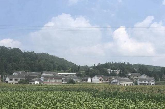 贵州金沙:烤烟高粱收益好 农民丰收笑颜开