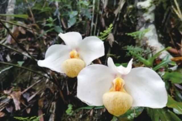 贵州生物多样性丰富度居全国前列