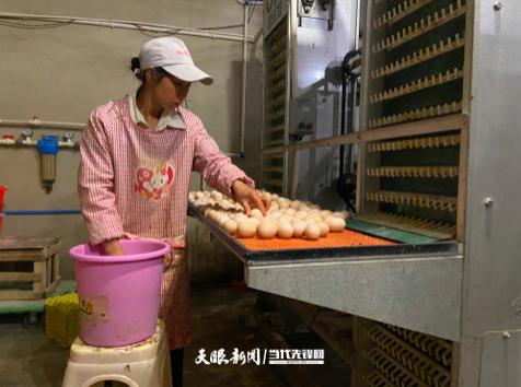 野钟乡:支部建在产业上 引领带动致富忙
