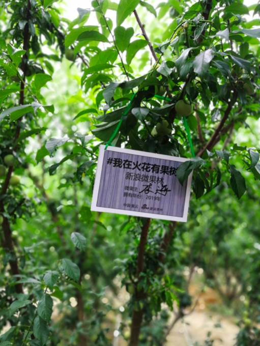 果树上挂的牌子均有签名