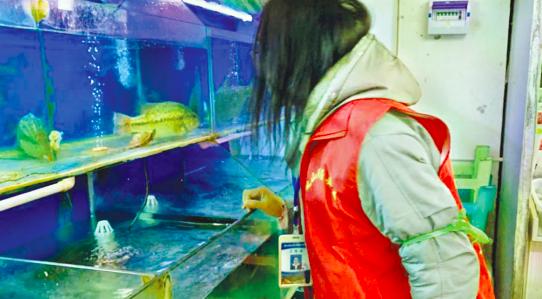 金阳街道排查水产市场和餐饮门店 禁止销售野生鱼类