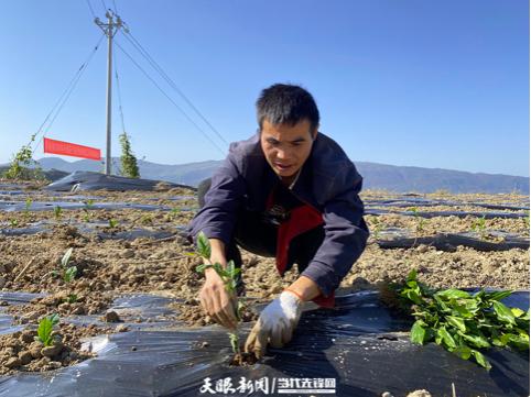 印江自治县罗场乡:干群一条心 共谋产业路
