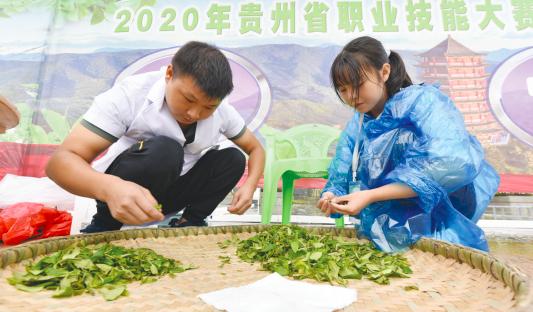 贵州省第三届古树茶加工技能大赛在习水举行