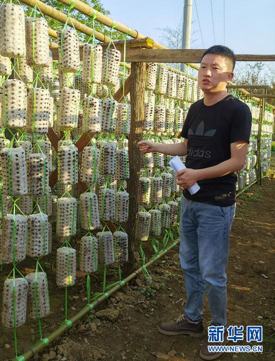 洒金村驻村第一书记刘刚介绍菌棒。 向定杰 摄
