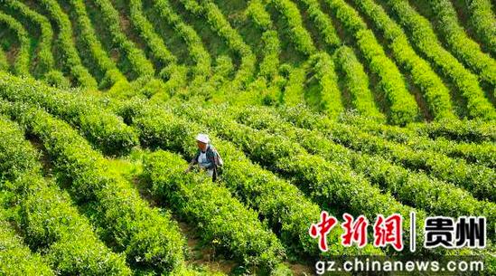 """贵州惠水:做足""""三篇文章"""" 推动农业现代化高质量发展"""