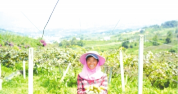 在贵州乌蒙山腹地,凉都六盘水的红心猕猴桃品质上佳,形成了大规模种植。高原山地特色的新农业,正在带动当地农民致富。