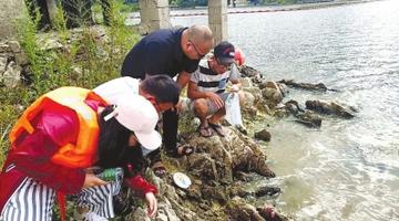 南美福寿螺入侵阿哈湖