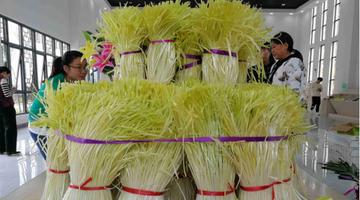 贵州这个县的12万斤韭黄走出国门