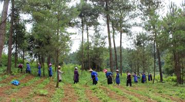 贵州大力推动林下经济发展