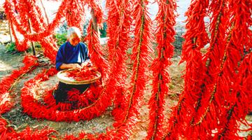 第5届贵州·遵义国际辣椒博览会即将举行