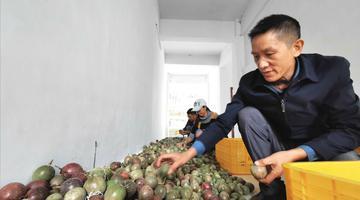 """贵州庆祝2020年""""中国农民丰收节""""活动将在松桃举行"""