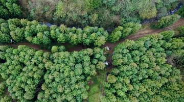 贵州大方:食用菌铺就绿色致富路