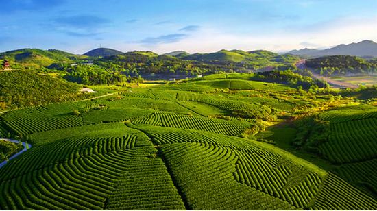 贵州大力推进农业结构调整,发展茶叶,蔬菜等产业.