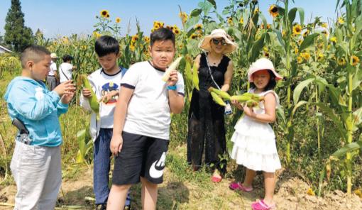 家长和孩子们一起掰玉米。
