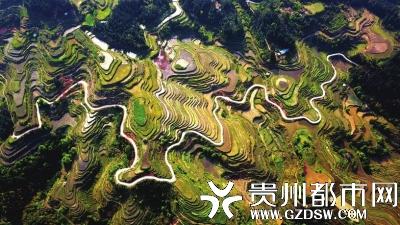 从江县丙妹镇大洞村,山路穿梭在梯田间。 吴德军 摄