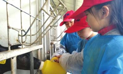 小朋友在给小奶牛喂水。