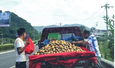 街上叫卖的冒牌修文猕猴桃。