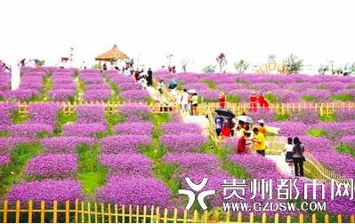 游客邂逅紫色浪漫。
