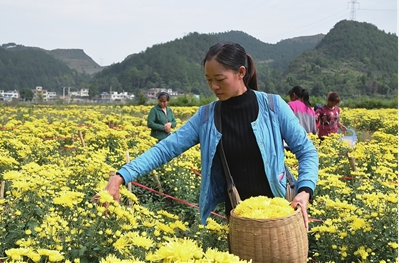图/文 本报龙里记者站 杨娜 张毅