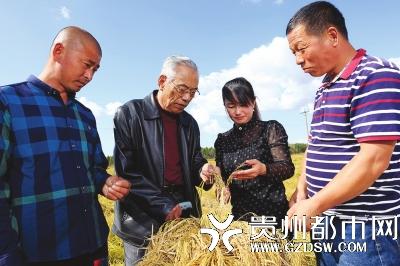 """""""稻花香之父""""田永太(左二)指导水稻合作社社员。"""