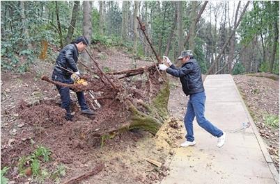 付强(右)和曾令强清除倒伏的树木(俞晖/摄)