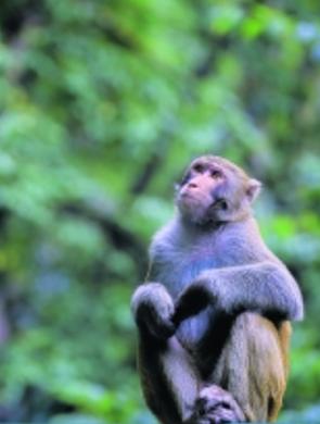 贵阳野生动植物资源保护管理能力提升
