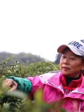 绥阳:四月宽阔水 最是茶香浓