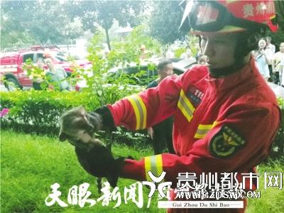 消防员抓到的灵猫