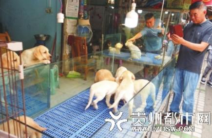 寵物專區,市民給狗狗拍照。