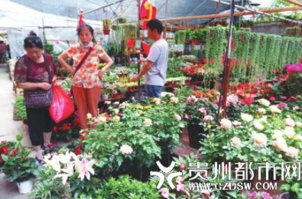 曾阿姨(左)正在挑選盆栽。