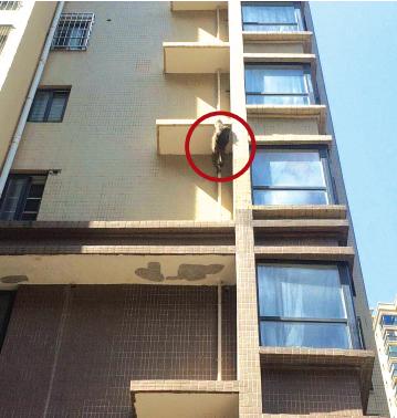 猴子在爬外墙(红圈处)