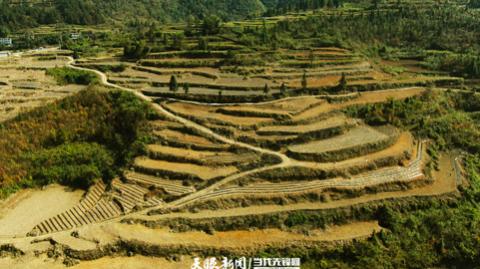 印江自治县罗场乡数年:干群一条心 共谋产业路
