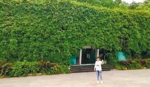 """市民在""""绿房子""""前拍照。"""