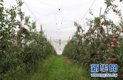 """""""穗毕同心,情系乌蒙"""" 广州帮扶威宁发展果蔬产业助脱贫"""