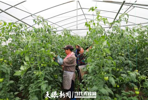 纳雍县新房乡乌沙寨村:产业扶贫路子对 村民增收底气足