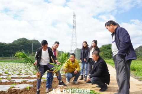 东西部扶贫协作牵手发展 六盘水一小镇蔬菜迎来韩国订单